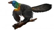 dinosaur-rainbow-feathers-4
