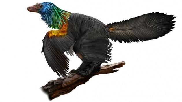 dinosaur-rainbow-feathers-4
