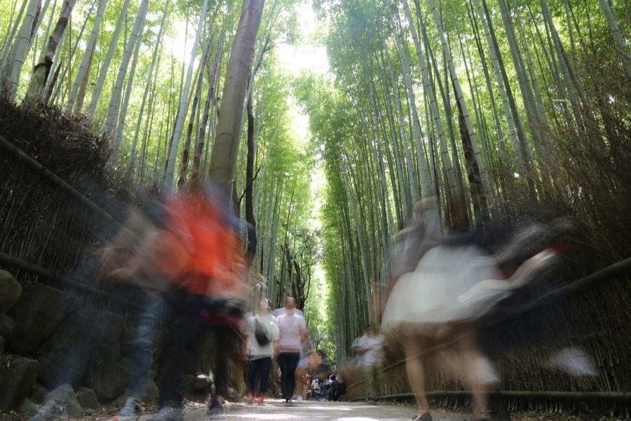 foresta-di-bambu_cinzia-pixi-corrado