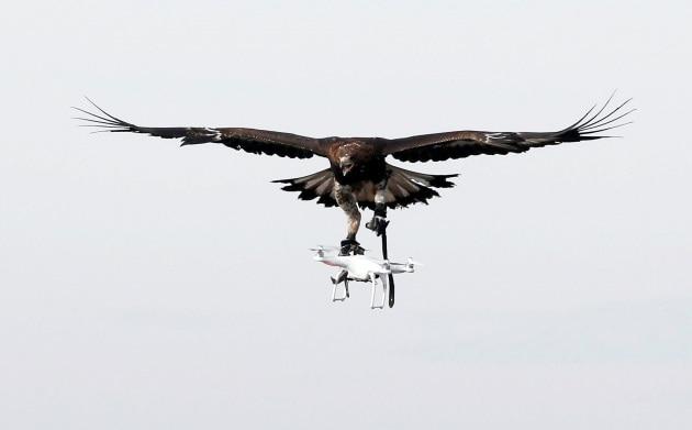 Aquile contro droni