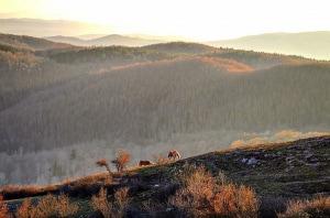 21 marzo, Giornata internazionale delle foreste