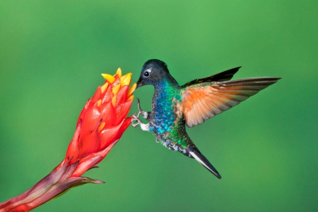 A rischio centinaia di specie in più del previsto