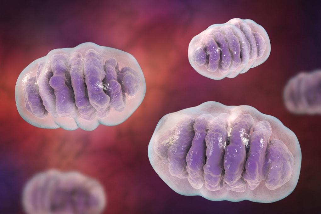 Stress cellulare: a piccole dosi, fa bene