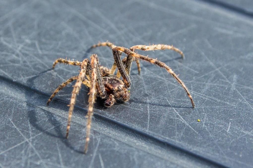 La stanza con più di 10 mila ragni