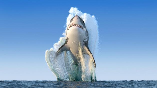Chi ha paura dello squalo bianco?