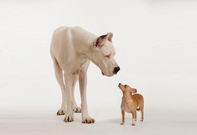 cacca-cani