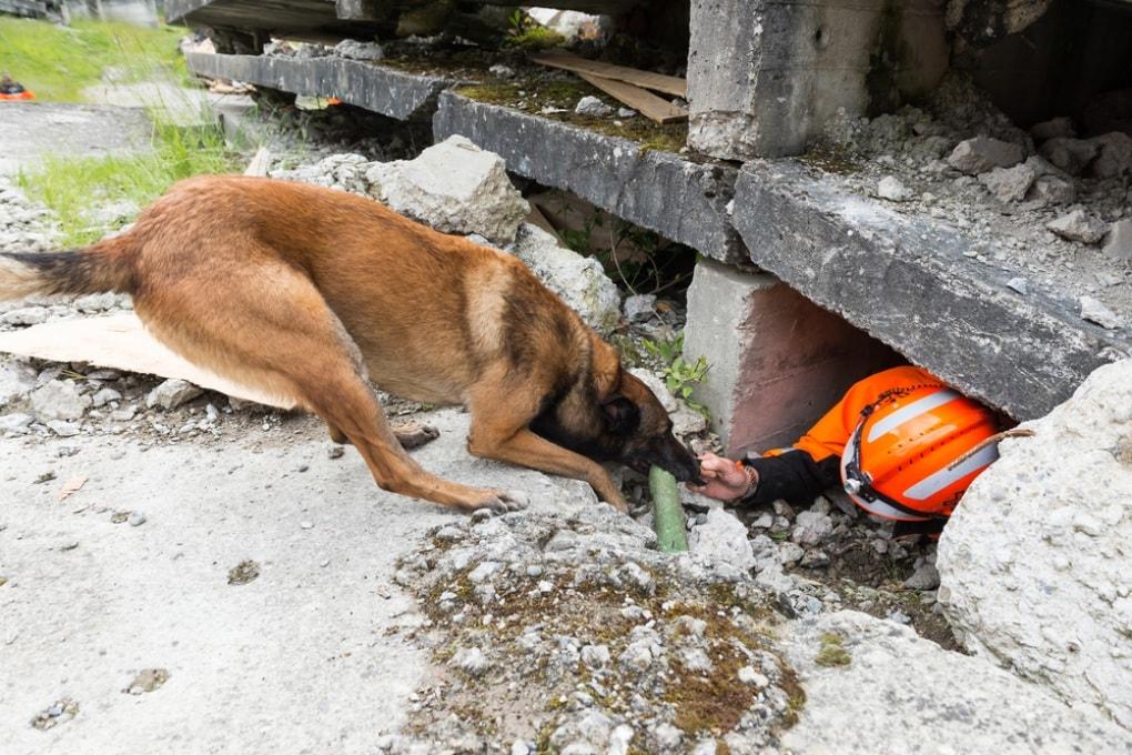 Cani (e altri animali) non prevedono i terremoti