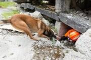 cane, terremoto