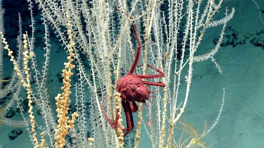 crab-hires