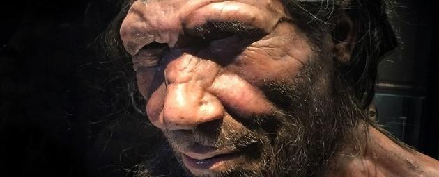 Cervelli neanderthaliani in miniatura