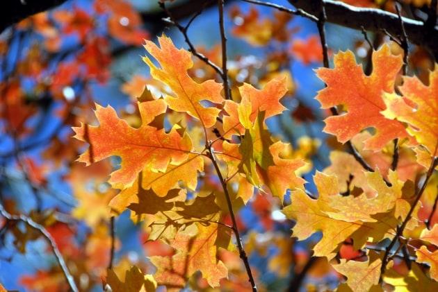 L'Equinozio d'autunno è oggi