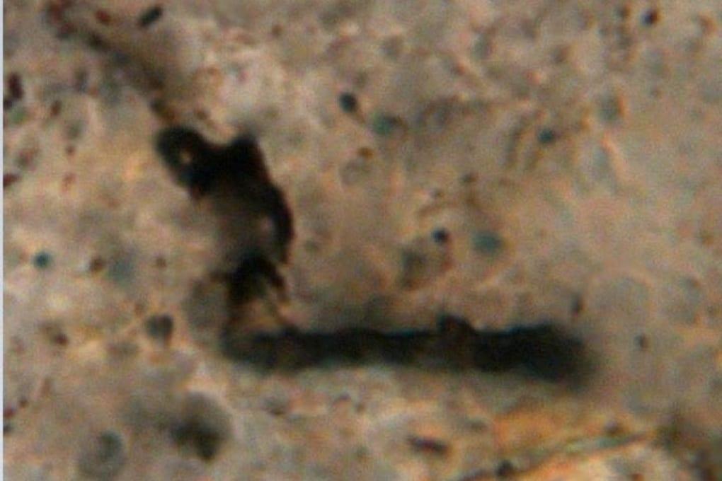 Fauna di batteri primordiali nelle rocce australiane