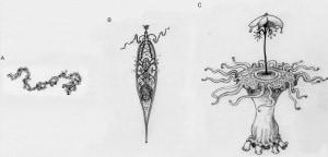 alieni, evoluzione, vita nell'universo, darwin, complessità