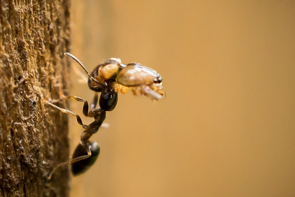Le formiche usano il Sole come faro