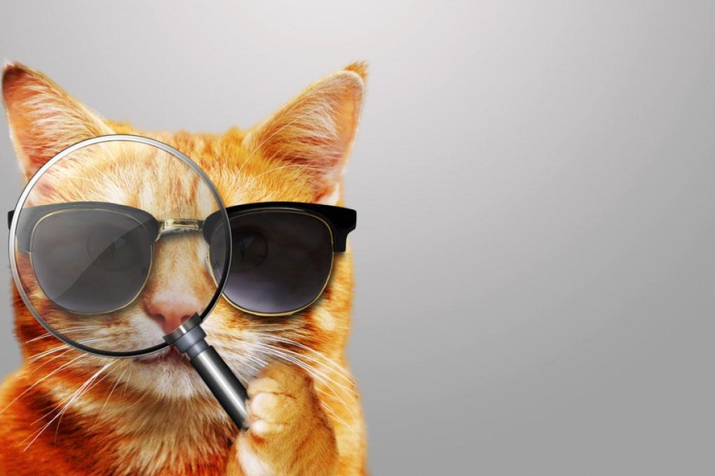 Acoustic Kitty: quando la CIA arruolava i gatti