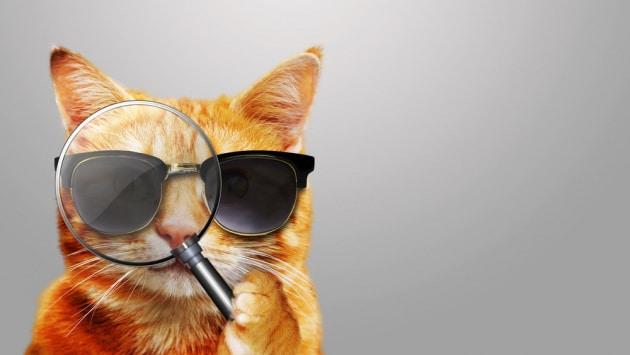 cia-spionaggio_acoustic-kitty