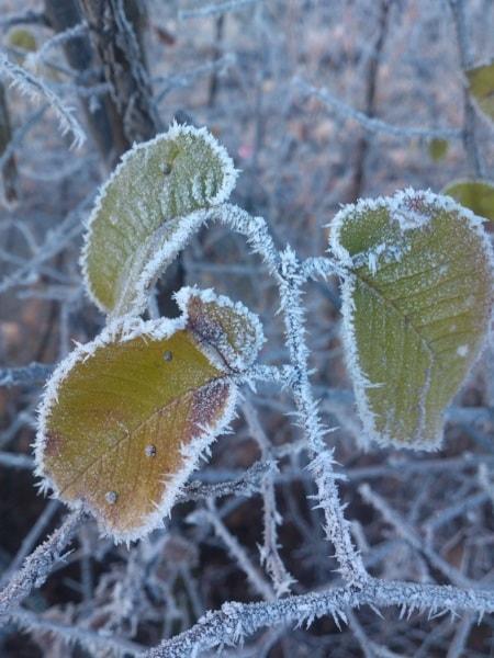 confine-di-ghiaccio_renato-de-zotti