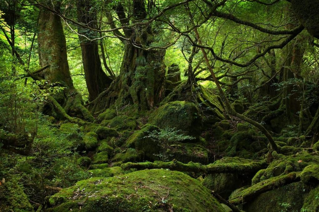 Sempre più CO2 dal suolo delle foreste