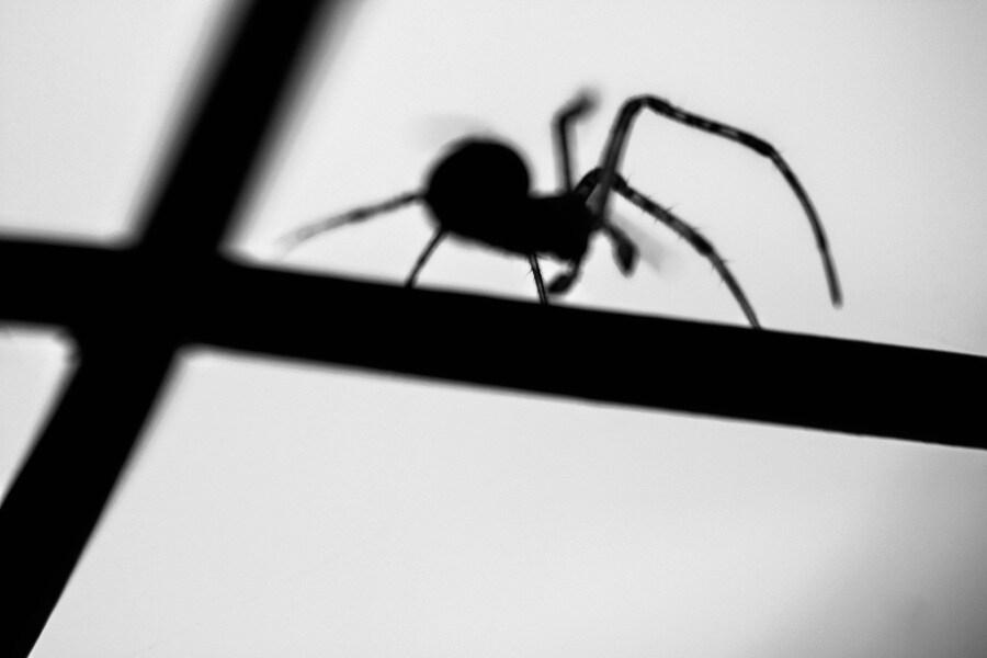 ombra-del-ragno_cinzia-pixi-corrado