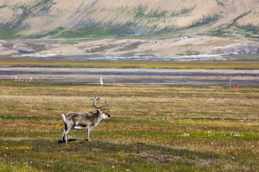 Gigantesche riserve di mercurio nel permafrost dell'emisfero settentrionale