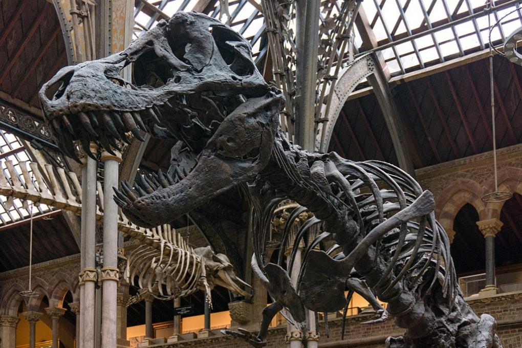 Il T. rex non poteva estrarre la lingua come si vede nei film