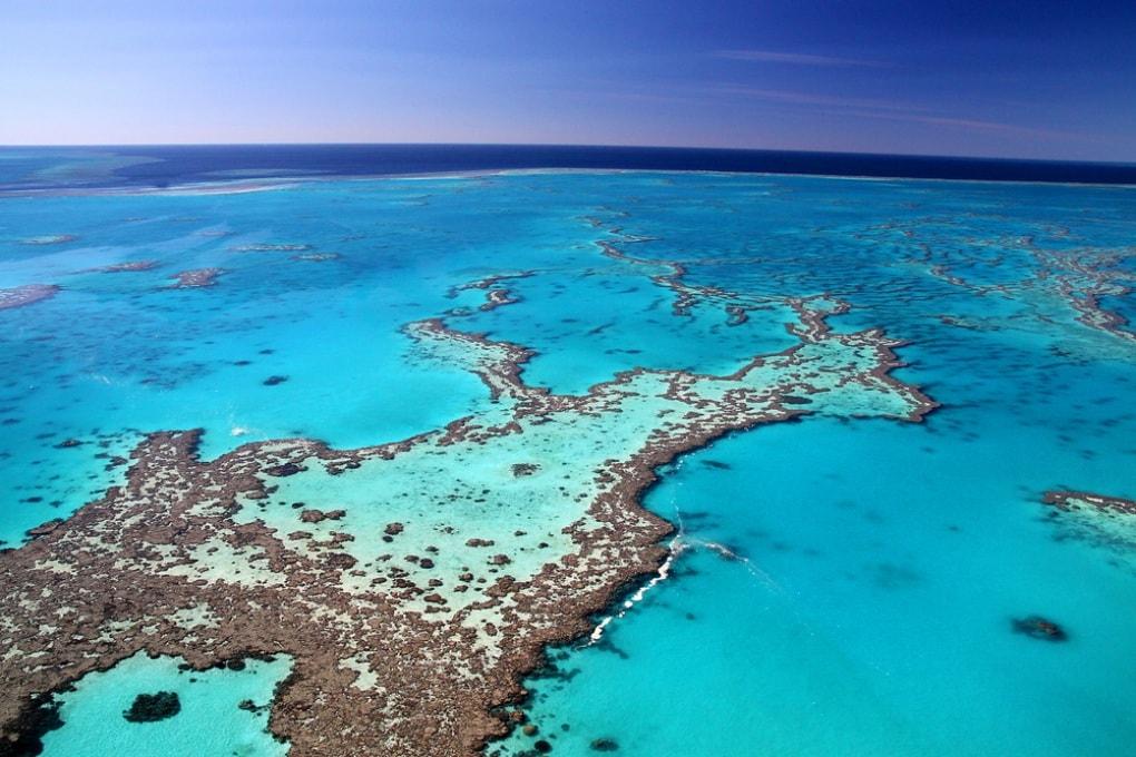 I coralli producono ombrelli di nuvole per proteggersi dal caldo