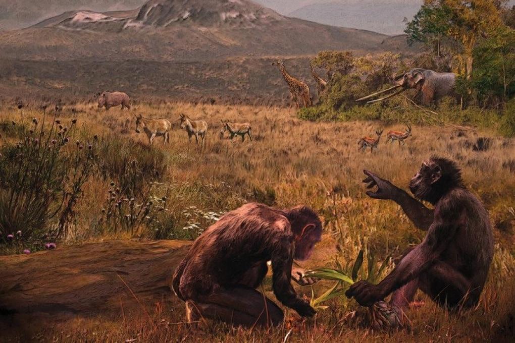 L'antenato europeo di uomo e scimpanzé