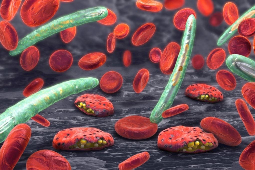 La composizione del sangue umano influenza le decisioni del parassita della malaria