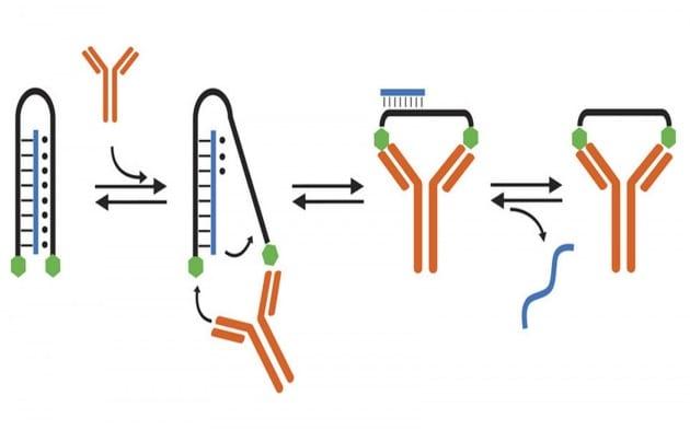 Medicina di precisione: la nanomacchina italo-canadese per portare farmaci dove serve