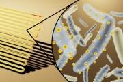 kelsey-sakamoto-cyborg-bacteria-cover_1024