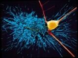 neuroni-2