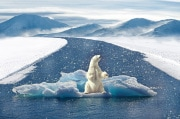 polar-bear-2750604_960_720