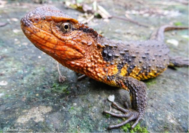Oltre cento nuove specie animali scoperte nel 2016 nel Mekong