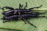 insettostecco