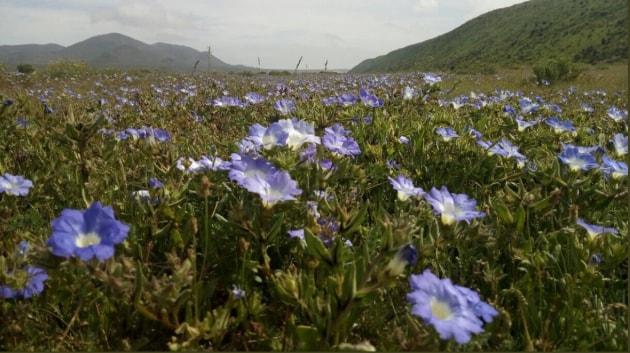 Le piante con fiori sono 50 milioni di anni più antiche del previsto
