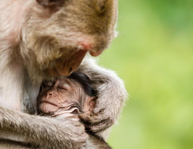 I mammiferi preferiscono tenere i cuccioli sulla sinistra