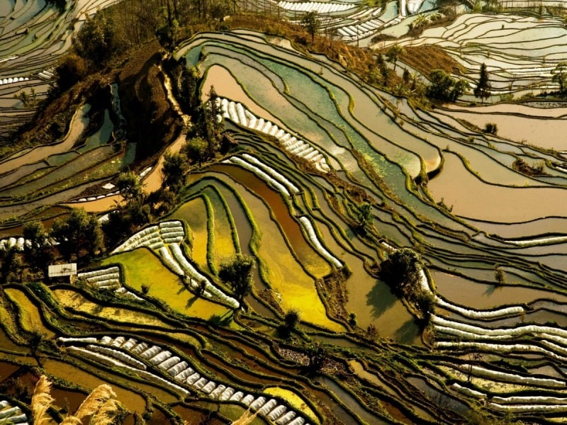 the-rice-terraces-of-chinas-yunnan-province-are-carved-into-the-hillside-different-types-of-vegetation-lend-the-landscape-its-alternating-hues