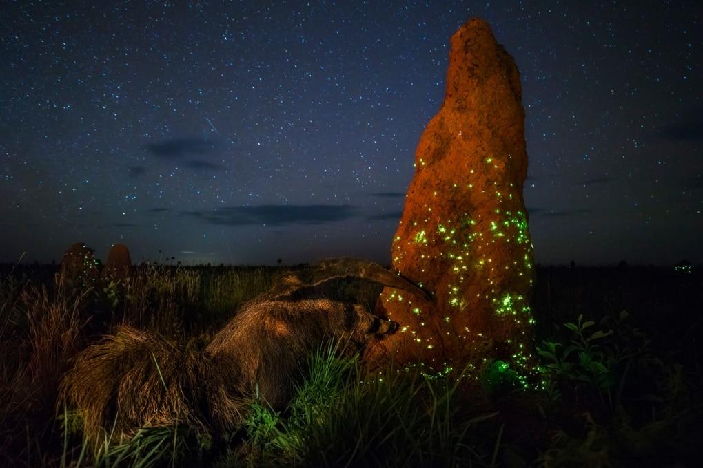 Anche le emissioni delle termiti fanno riscaldamento globale