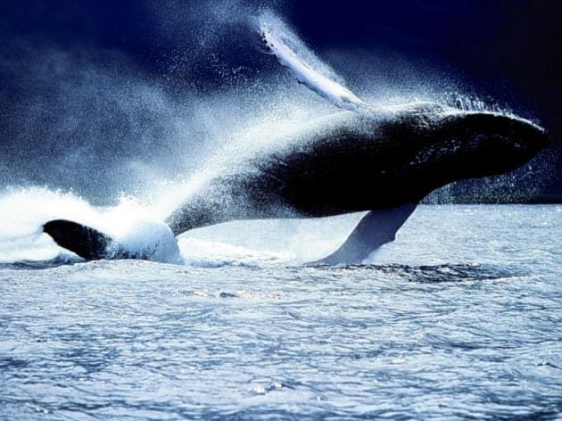 Nasce in Antartide l area marina protetta più grande al mondo