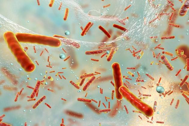 I batteri comunicano in modo sofisticato