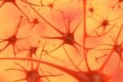 Cellule riprogrammate per combattere il Parkinson