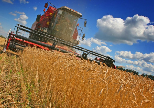Aumenta la CO2, milioni a rischio di carenze nutrizionali