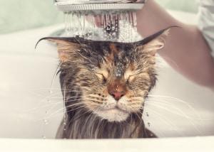 gatti, etologia, comportamento degli animali