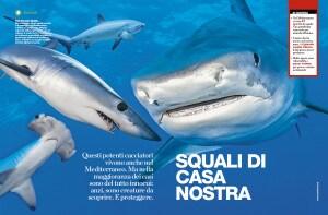 Focus 311, grande squalo bianco