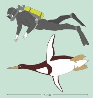 fossili, animali giganti, pinguini, uccelli, evoluzione, paleocene, animali estinti