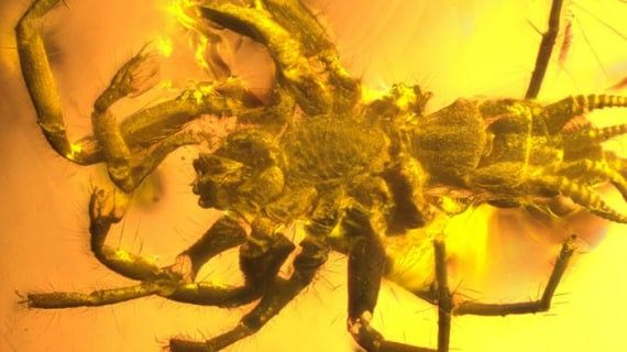 ragni, aracnidi, ragnatele, scorpioni, filiere, ambra, resina fossile, fossili, Chimerarachne Yingi