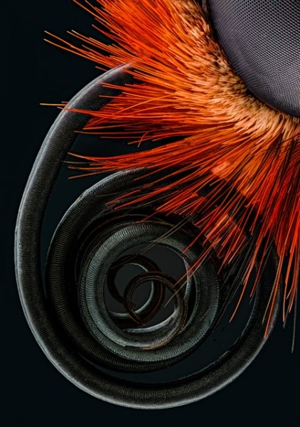 29089-schroeder-butterfly-proboscis
