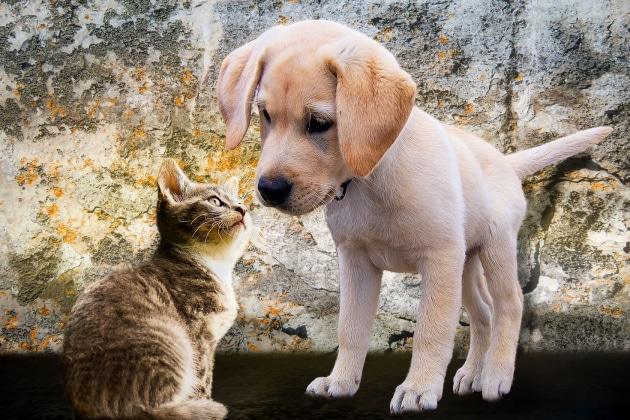 È più intelligente il cane o il gatto?