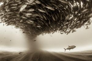 pesci, creature marine, stranezze animali, curiosità, evoluzione, etologia, comportamento animale