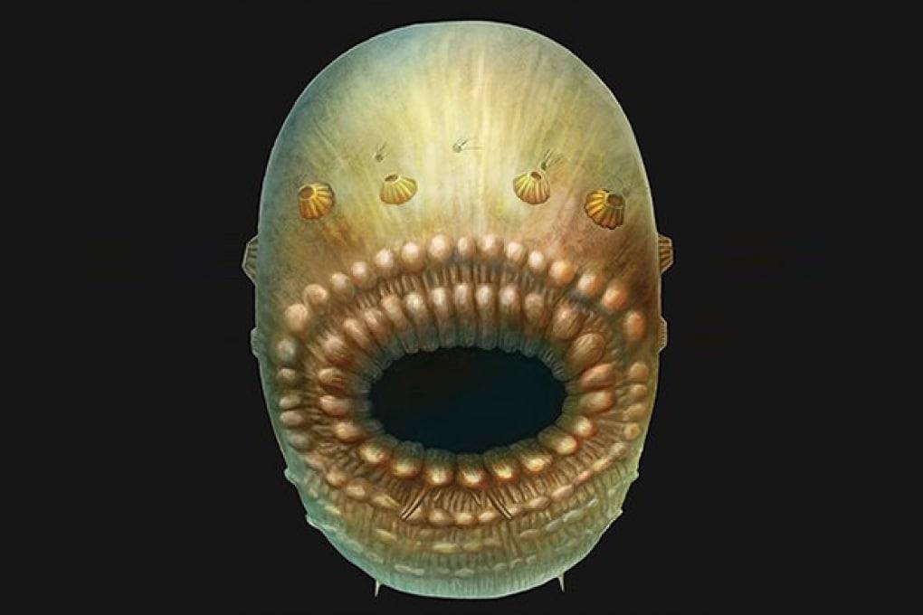 Il nostro più antico antenato